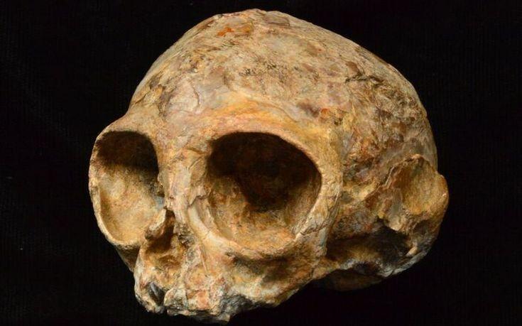 Crânio de 13 milhões de anos